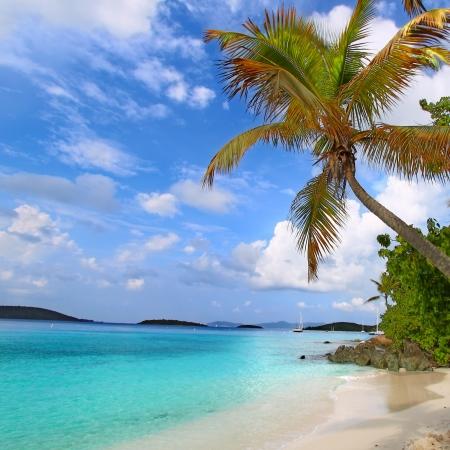 聖ヨハネ米領バージン諸島のビーチの上のヤシの木