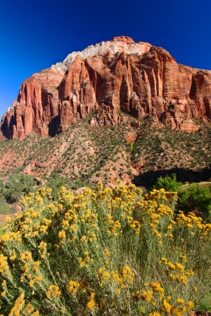 Flowers and mountains of Zion National Park in southwest Utah Stock Photo - 23461673