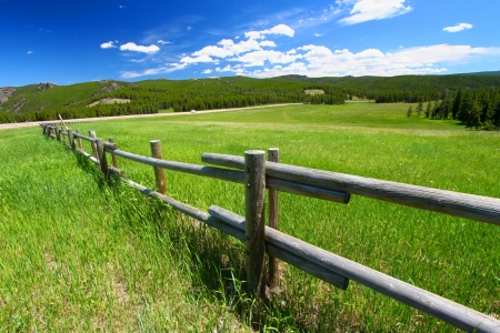 fenceline: Old wooden fenceline in a meadow of the Bighorn National Forest in Wyoming Stock Photo