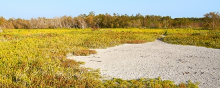 Coastal prairie of Everglades National Park dominated by saltwort  Batis Maritima  photo
