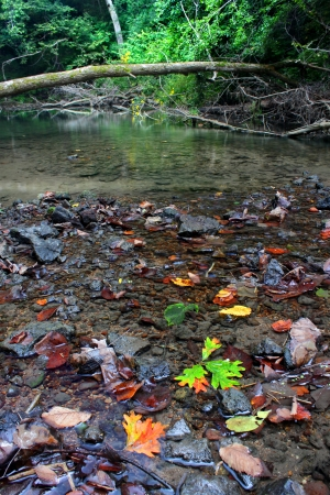 Kinnikinnick Creek flows through dense forests of northern Illinois photo