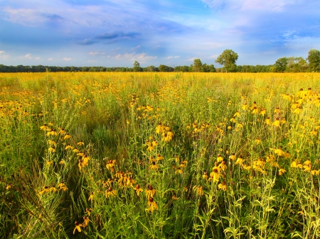 prairie: Illinois Prairie Flowers in Bloom Stock Photo