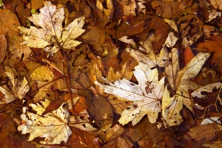 Forest Floor Scenery Illinois photo