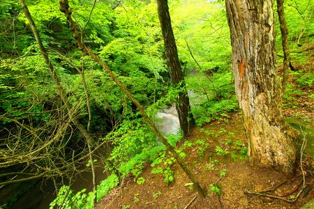 Matthiessen State Park Waterfall Illinois photo