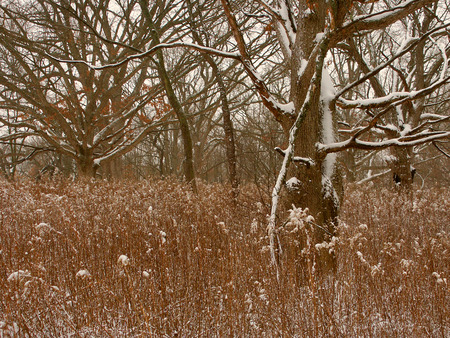 midwest: Midwest Winter Forest Scene