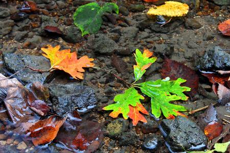 Autumn Creek Background photo