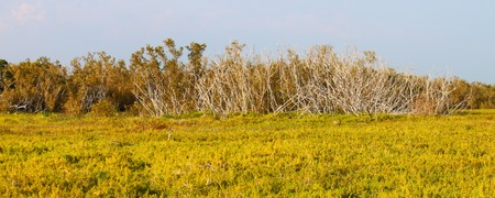Panoramic view of the coastal prairie at Everglades National Park, Florida photo