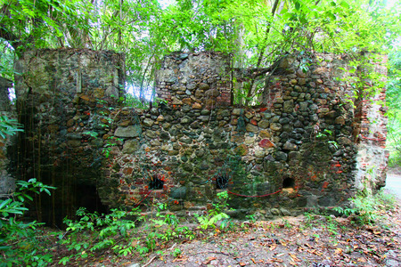 overtaken: Old stone structure overtaken by lush tropical vegetation on Tortola British Virgin Islands