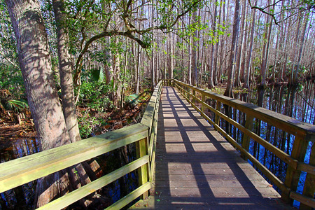 Highlands Hammock State Park in Florida trails swamp boardwalk