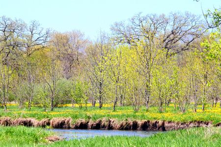 Piscasaw Fen Conservation Area Illinois photo
