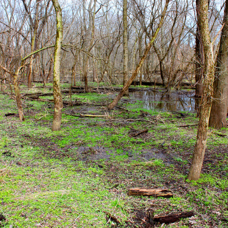 illinois river: Kyte River Floodplain Forest Illinois Stock Photo