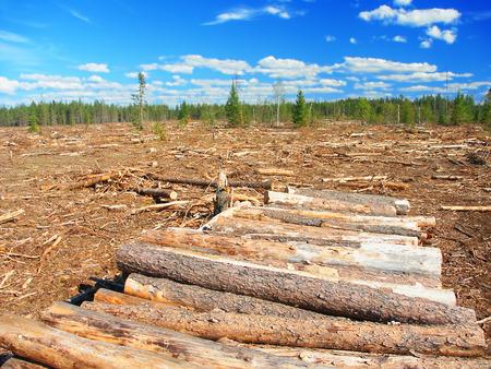 logging: Northwoods Michigan Logging Operation