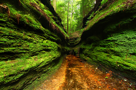 Narrow moss covered gorge at Turkey Run State Park in Indiana Imagens