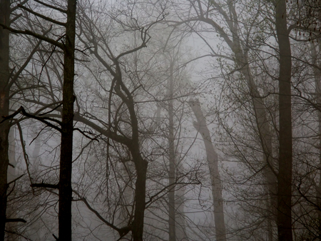 Dense fog obscures the forest on a cool spring day at Shenandoah National Park Virginia