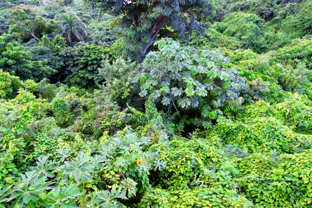 Tropical rainforest plants on the Caribbean island of Puerto Rico