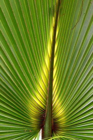 Florida Palmetto Background Stock Photo