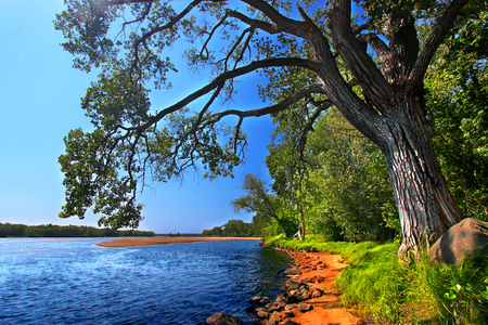 Spreading branches of an old oak tree along the Wisconsin River in Portage Stock Photo