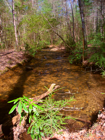 Shallow stream running along the Appalachian Trail in Georgia