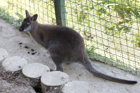A closeup shot of a kangaroo sitting in the cage 스톡 콘텐츠
