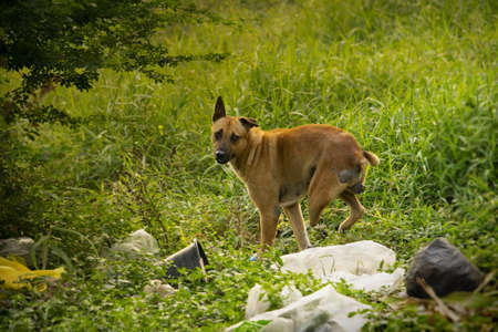 A three legged brown stray dog at a field with scattered trash Stock fotó