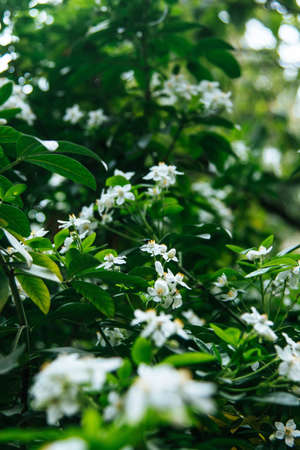 A vertical shot of beautiful greenery and white little flowers on a plant with a blurred background