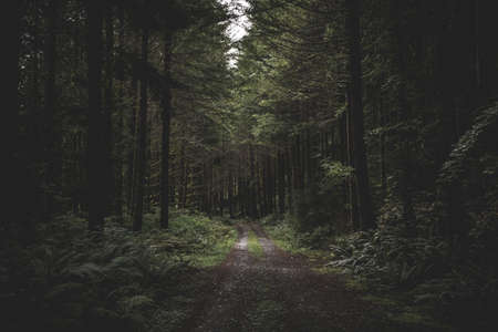 A curvy narrow muddy road in a dark forest surrounded by greenery and a little light coming from above Archivio Fotografico