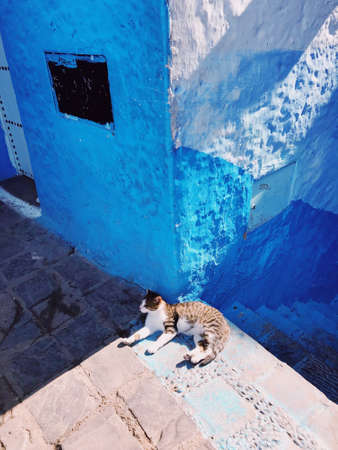 A vertical shot of a cat laying near stairs and a blue wall on a sunny day