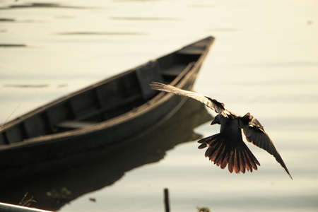 A closeup shot of an eagle flying on a wooden boat background