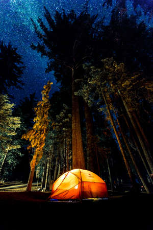 Lit-up tent in a forest in Sunset Campground, Hume, United States