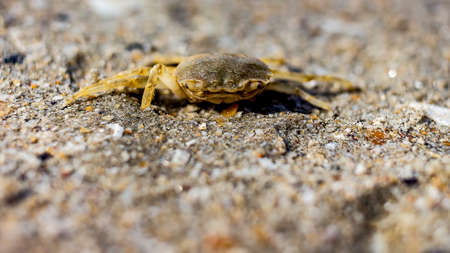 A closeup shot of a small crab on the sea sand