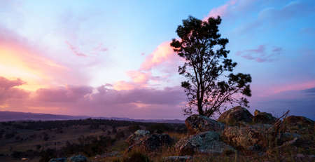 A single tree in a desert with a beautiful cloudy sky in the background at sunset