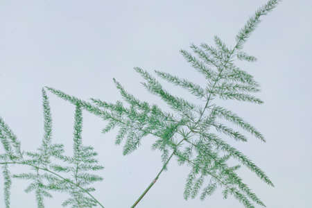 Green plant on white snowy background