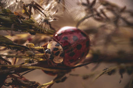A closeup of a beautiful ladybug on leaves in a forest