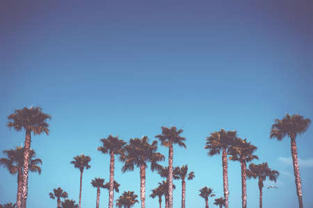A beautiful shot of palm trees on a sky blue clear background