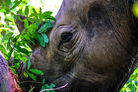 A closeup of a rhino near a tree with blurred natural background