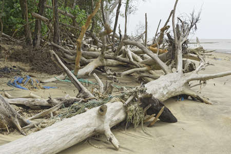 discarded fishing gear and logs washed ashore, north bank of the estuary of Cayenne River, French Guiana