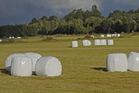 The field with combined grass hays wrapped in plastic and surrounded by trees