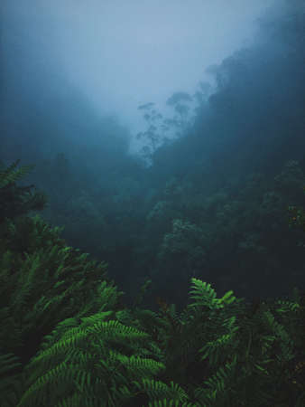 A vertical shot of plants and trees on a mountain in a fog Archivio Fotografico