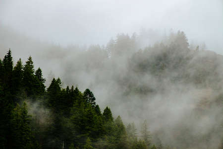 A beautiful shot of forested mountains in a fog