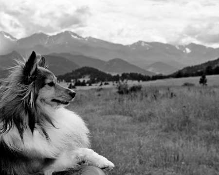 A shallow focused greyscale shot of a beautiful collie dog in mountainous fields Archivio Fotografico