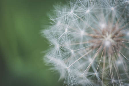 A closeup shot of a beautiful dandelion flower growing in a forest with a blurred natural background