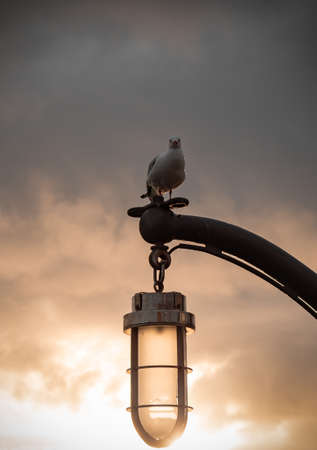 A vertical shot of a white seagull perched on a lamp pole under a pinkish sky