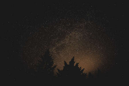 A beautiful silhouette shot of trees under a starry night sky Banco de Imagens