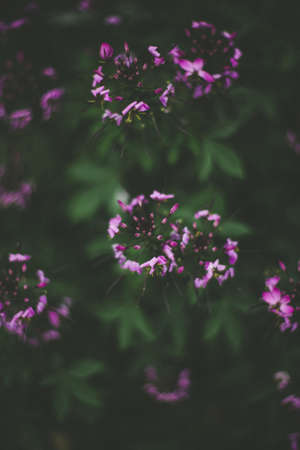A selective closeup shot of a beautiful purple flower with green leaves on a blurry background Stock fotó