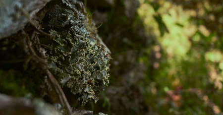 A close up of various types of lichen co-existing on a tree-trunk and rocks
