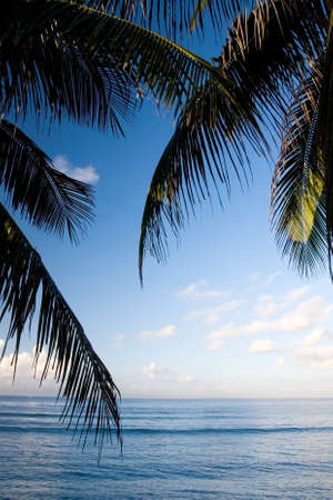 The beautiful scenery of a tropical beach with coconut leaves and blue sky background