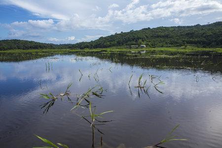 Kaw Marsh, Marais de Kaw view under a cloudy sky. French Guiana, South America, France