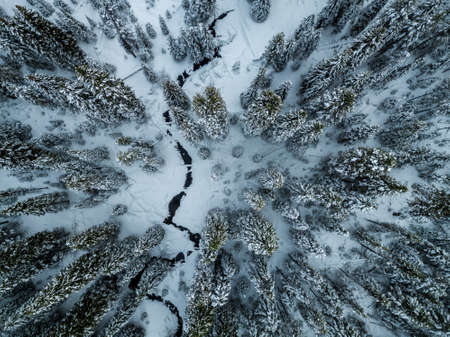 An aerial shot of pine trees covered in snow