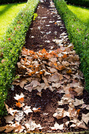 A vertical shot of a walkway with dried leaves in the park