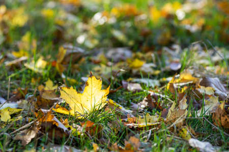 A selective focus shot of autumn leaves on the ground